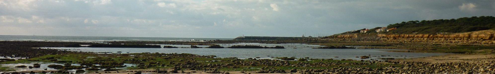 Sentinelles de l'Estuaire
